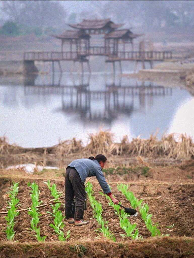 I Gansuområdet i Kina vattnar många sina odlingar med regnvatten. Foto: Greg Baker/AP/TT