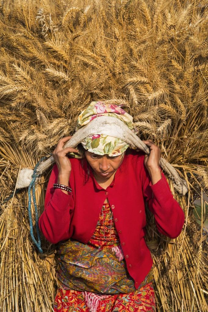 En sann grön revolution i konstruktiv anda kräver en hållbarhetsfilosofi som rör kultur och odling i stort. Foto: Bernat Armangue/AP/TT