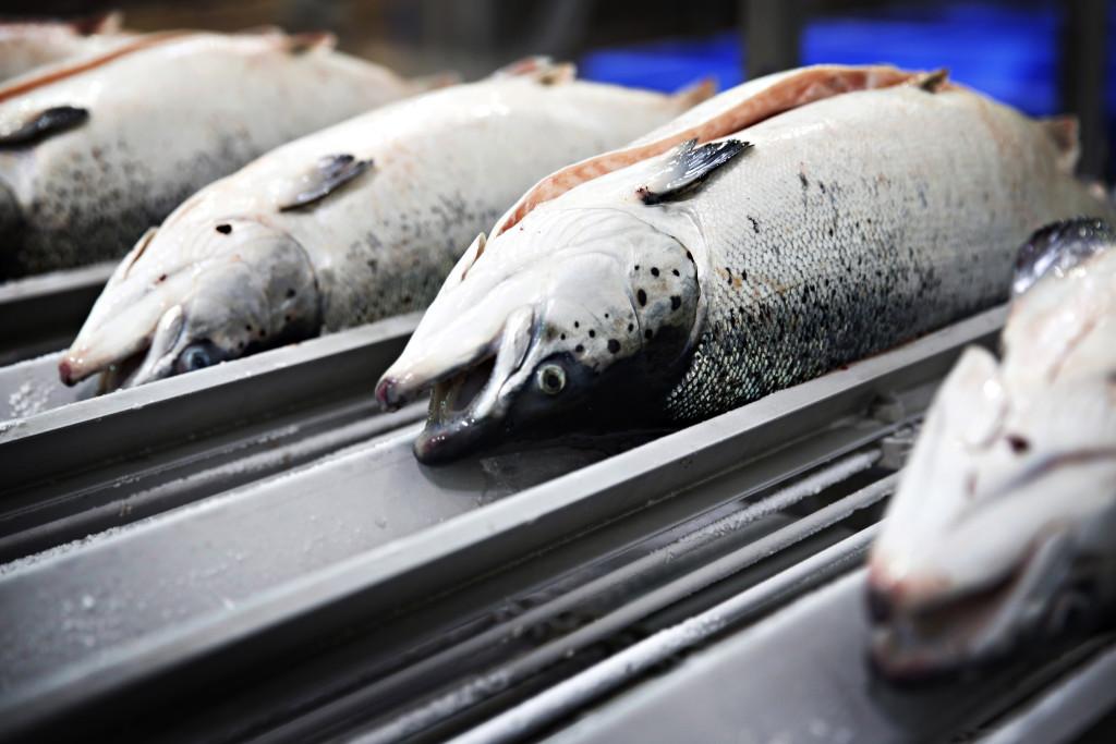 Utan fiskesubventioner skulle utfiskningen minska, skriver Mattias Svensson. Foto: Marte Christensen/TT