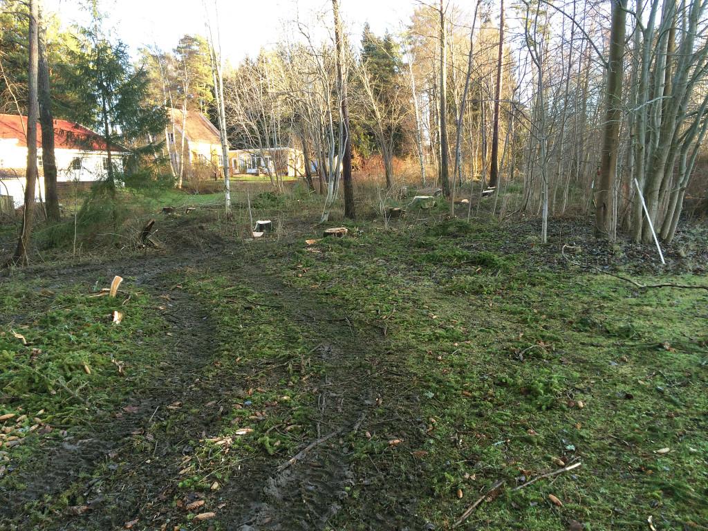 Ett hundratal friska träd höggs ner, och nu bor Murkelskogens invånare i ett kalhygge, skriver Kjell Prytz. Foto: Kjell Prytz.