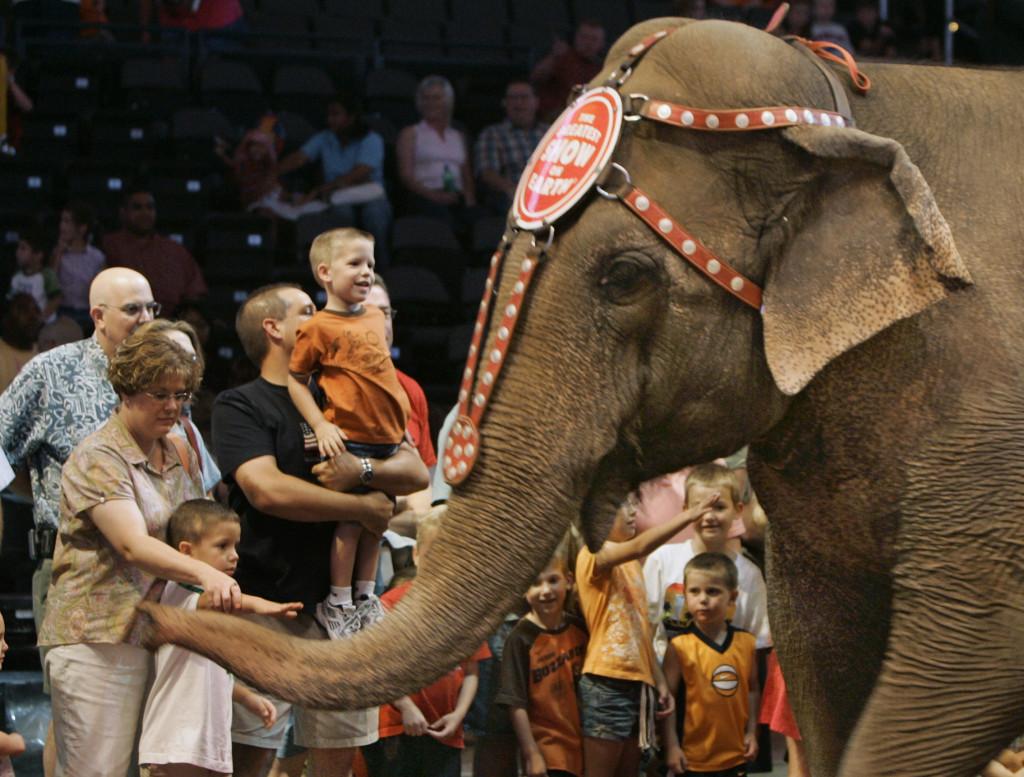 Ett arkivfoto på en elefant på en cirkus i Oklahoma City i USA. Cirkusen bestämde senare att inte längre ha vilda djur i sina shower. Foto: AP Photo/TT.