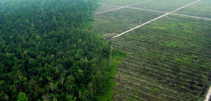 Palmoljebolag har ödelagt skog och torvmarker i Indonesien som förberedelse för att plantera oljepalmer. Avskogningen utgör ungefär en femtedel av de globala växthusgasutsläppen. Foto: Chedar Anderson/Greenpeace/TT.